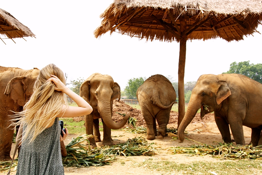 Chiang-Mai-Thailand-Tipps-Gity-Guide-Elephant-Nature-Park-2